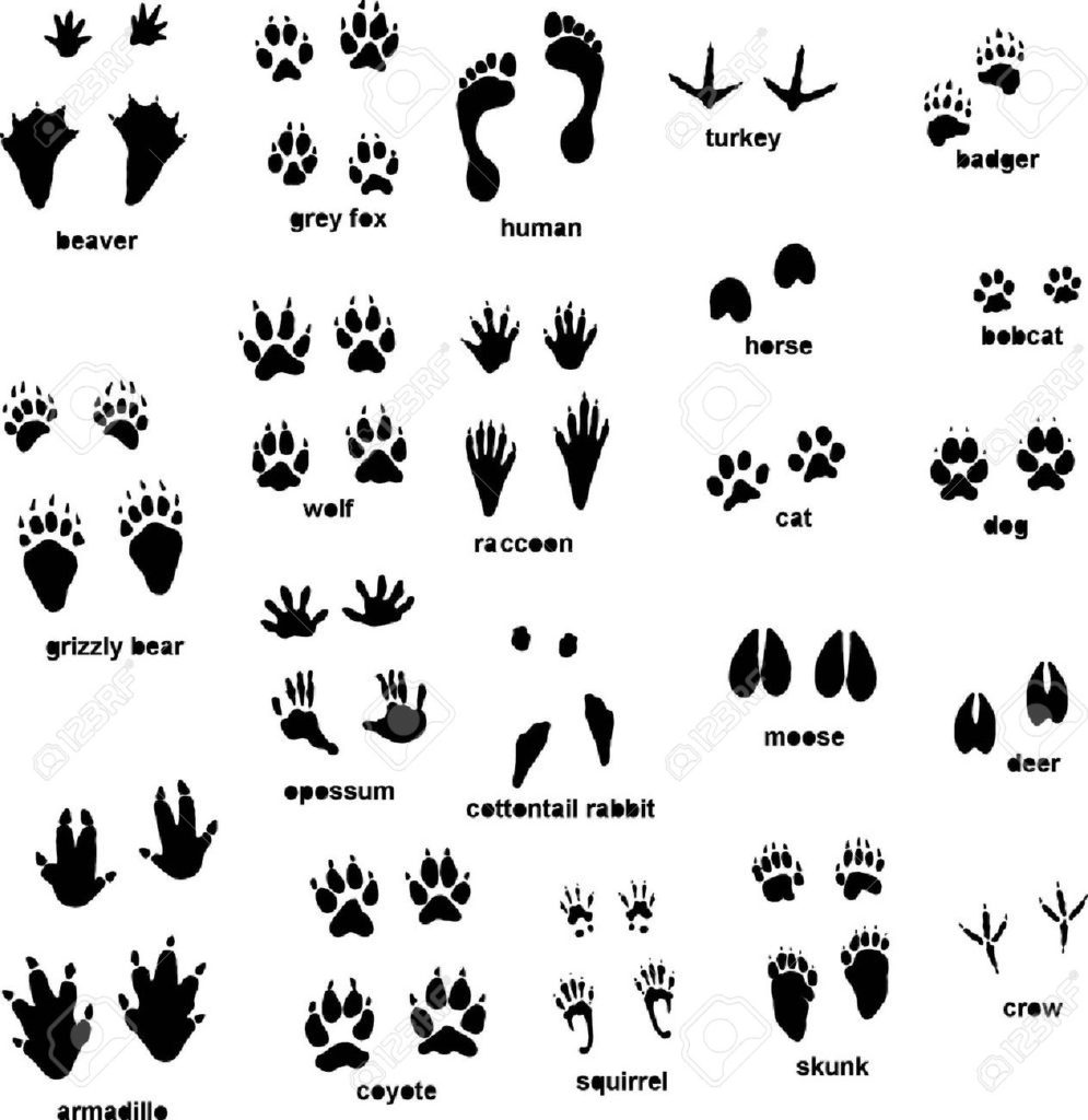 different animal tracks