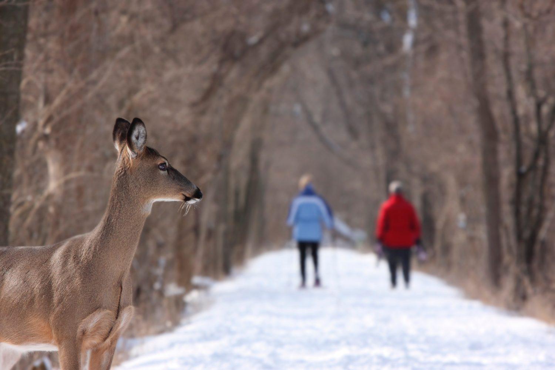 Winter-Animal-Tracking