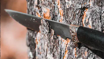 cutting tree with a camping knife