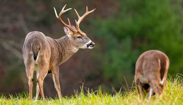 DEER ATTRACTANT FOR YOUR NEXT HUNT